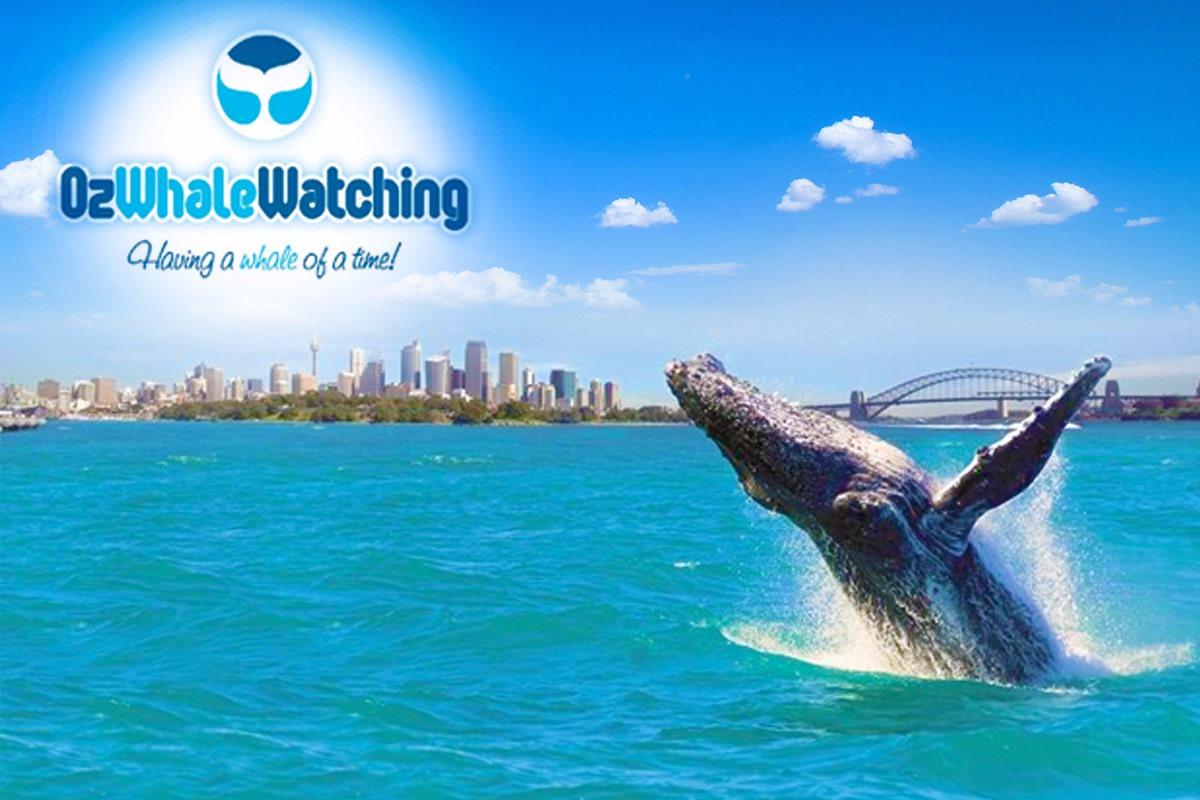 escursioni sydney whalewatching