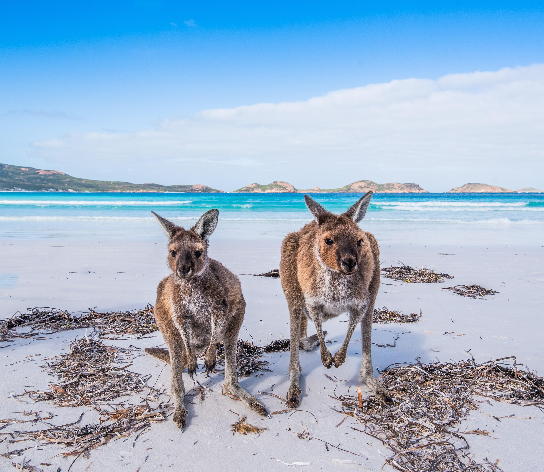 Kangaroo Island: Da Kangaroo Island A Sydney In Treno!