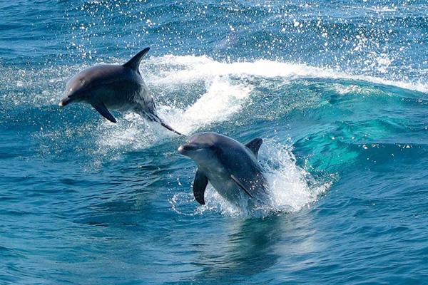 escursione Nuotiamo con i delfini a Rockingam
