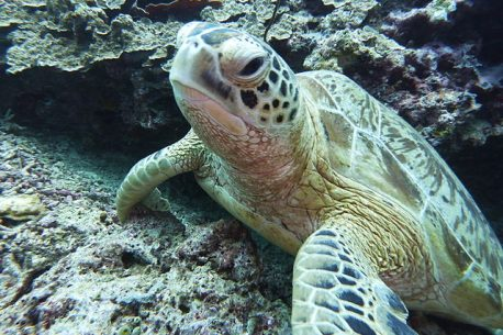 diving in Malesia