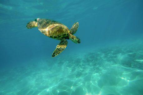 vacanze per subacquei