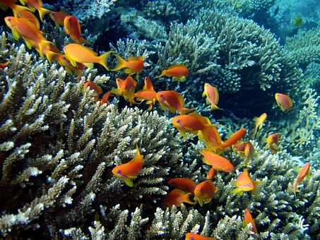 diving in micronesia