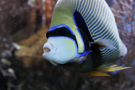 diving a Candidasa