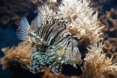 diving alle Fiji